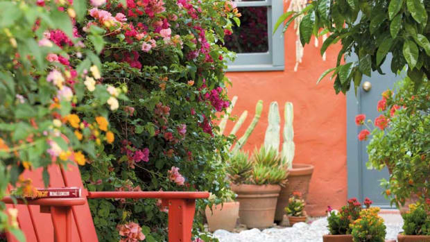 bougainvillea in bloom, Spanish bungalow garden