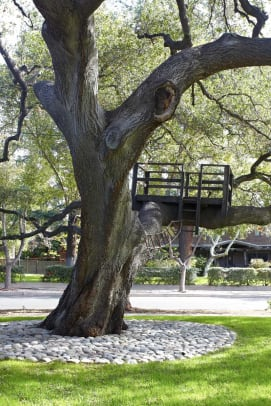 "A coast live oak supports a treehouse, a father-son project often used in TV commercials: ""Apparently, treehouses communicate wholesome fun!"" the dad says."