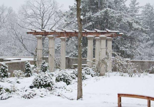 Bones of the Winter Garden