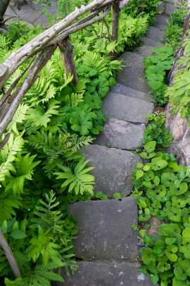 Ferns and wild ginger frame a stone stair.