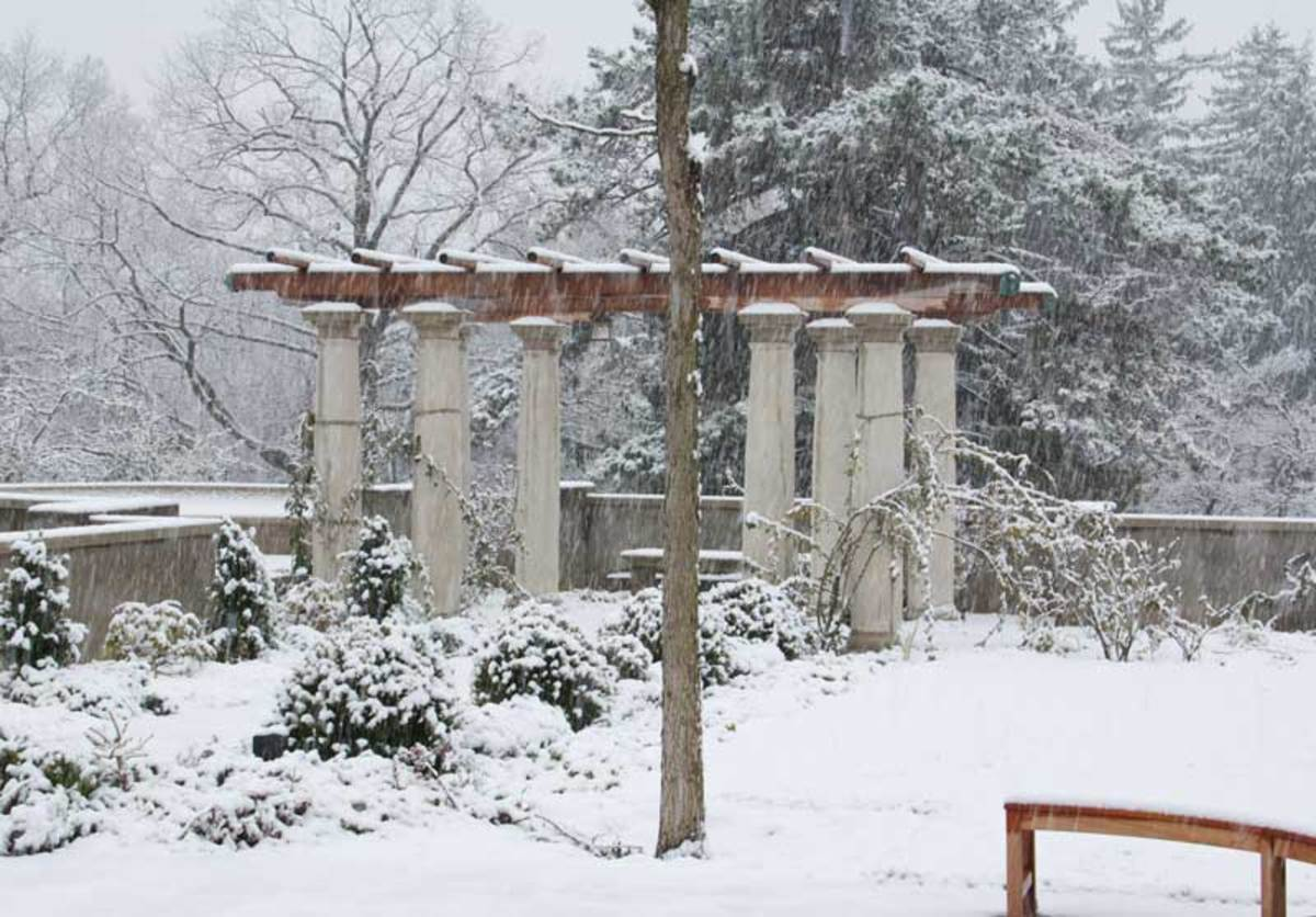 At Greenwood Gardens in New Jersey, the pergola is vivid in winter. Photo by Ken Druse