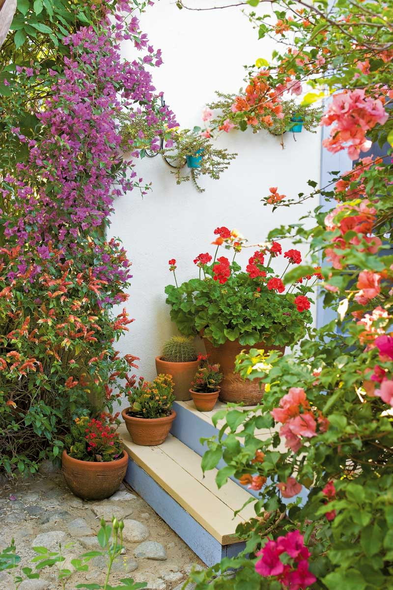 Steps to the casita (a guest house turned writing studio) are lined with pots of geraniums, kalanchoe, and cacti. Multi-color bougainvillea climbs the railing and walls.