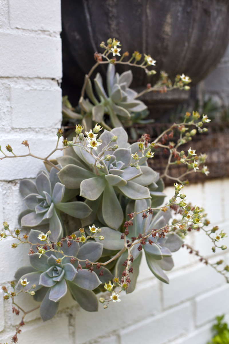 Succulents grow beneath the basin of the fountain in the arched wall.