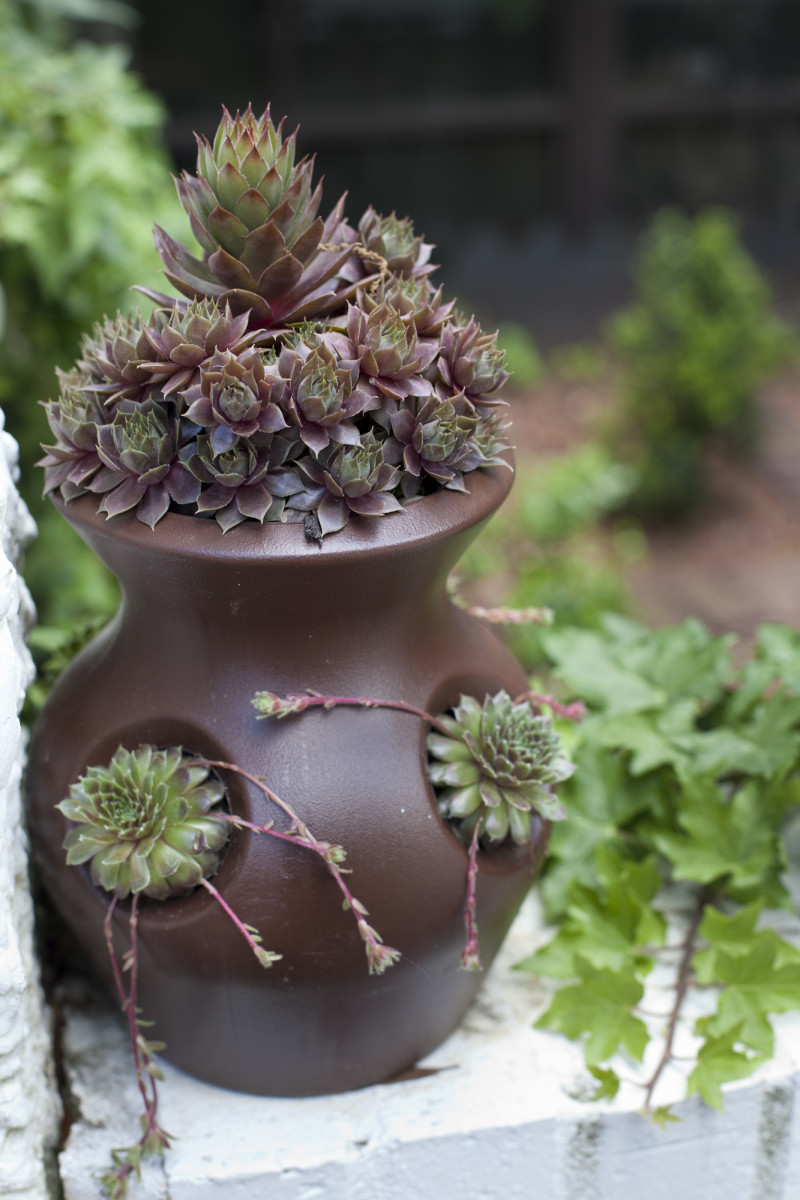 "A container pot holds the succulent Montoya calls ""hen and bitty,"" a type that can survive the few freezes Montgomery has each winter."