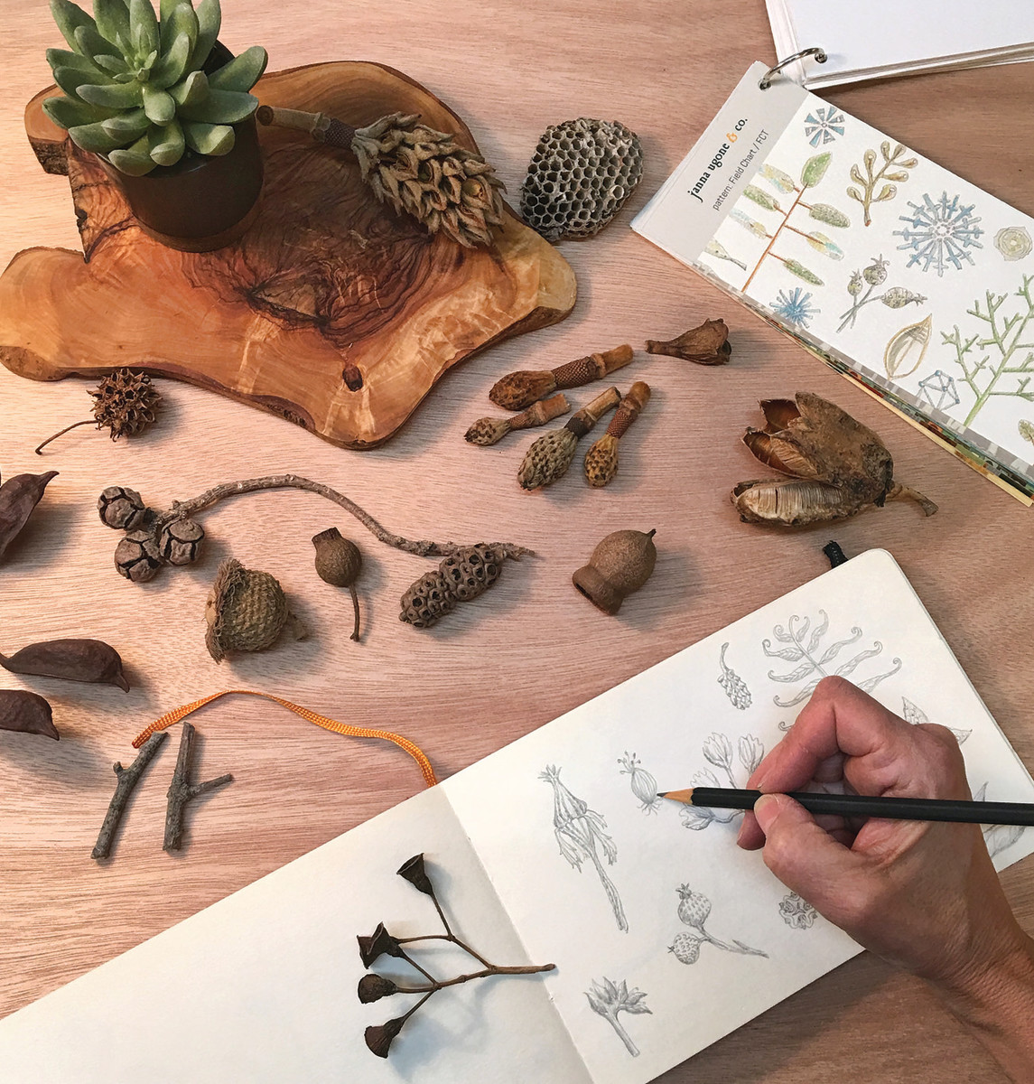 Many botanical designs are sketched from samples the artist collects from woods and fields near her home.